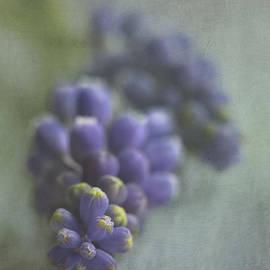 Elena Nosyreva - Grape Hyacinth