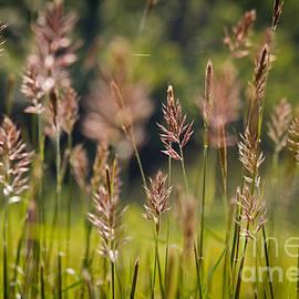 Douglas Stucky - Grass in The Cove