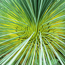 Steven Ralser - Grass Tree - Canberra - Australia