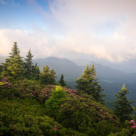 Serge Skiba - Grassy Ridge Rhododendron Bloom