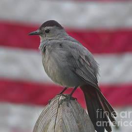 Marcel  J Goetz  Sr - Gray Catbird