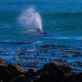 Gray Whale Blow Hole - Garry Gay