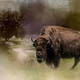 Jai Johnson - Grazing on Tuesday Buffalo Art