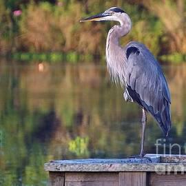 Gaye Halpin - Great Blue Heron