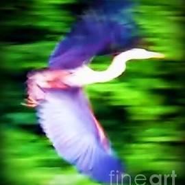 Judy Via-Wolff - Great Blue Heron