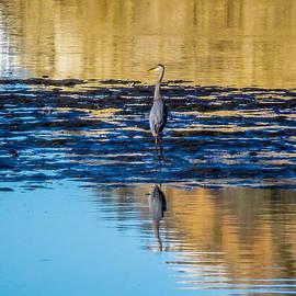 Pamela Newcomb - Great Blue Heron