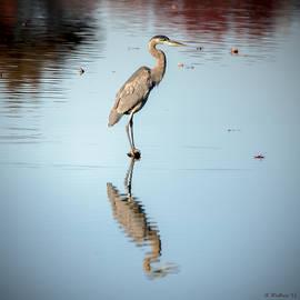 Brian Wallace - Great Blue Heron Profile