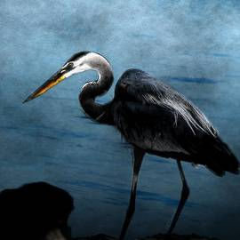Barbara Chichester - Great Blue On The Rocks