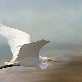Donna Kennedy - Great Egret