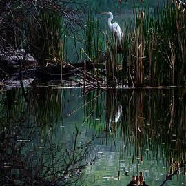 James Aiken - Great Egret in Central Park I