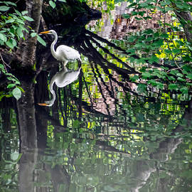 James Aiken - Great Egret in Central Park IV