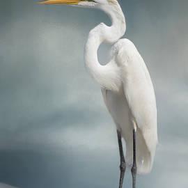 Kim Hojnacki - Great Egret