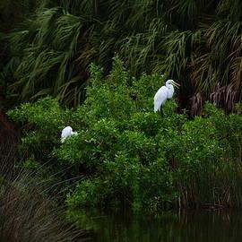 James Granberry - Great Egrets