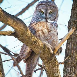 Ricky L Jones - Great Gray Owl