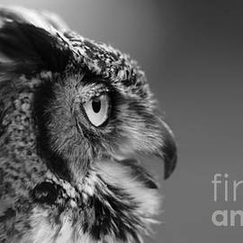 Joshua McCullough - Great Horned Owl Black and White