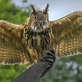 F Leblanc - Great Horned Owl