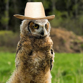 Les Palenik - Great Horned Owl with a Hat