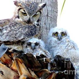 Selma Glunn - Great Horned Owls