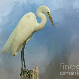 Myrna Bradshaw - Great White Egret on watch