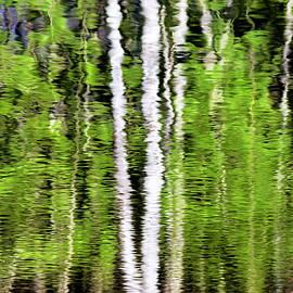 Christina Rollo - Green Abstract Tree Reflection