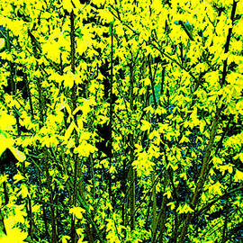 Julian Espinal - Green and yellow Spring