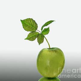 Shirley Mangini - Green Apple