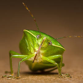 Tin Lung Chao - Green bug