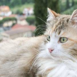 Mariana Mincu - Green eyes cat