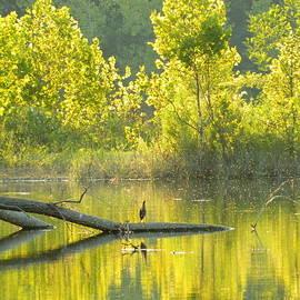 Kathy Barney - Green Heron Gold Pond
