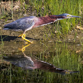 Ricky L Jones - Green Heron