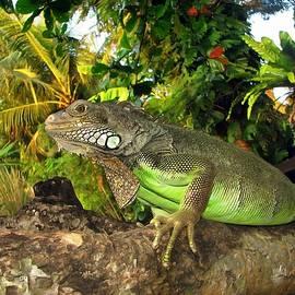 Sergey Lukashin - Green iguana