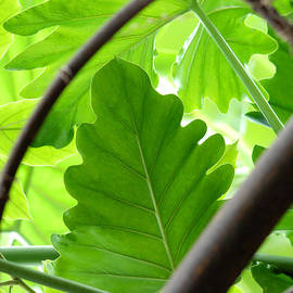 Glenn Morimoto - Green leaf through branches