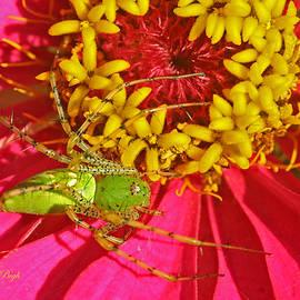 Dorothy  Pugh - Green Lynx Spider