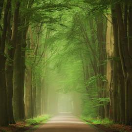 Green Mist - Martin Podt