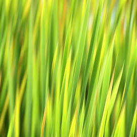 Christina Rollo - Green Nature Abstract