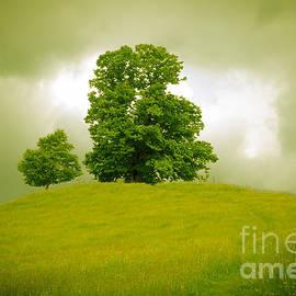 Stephen Allen - Green on Green