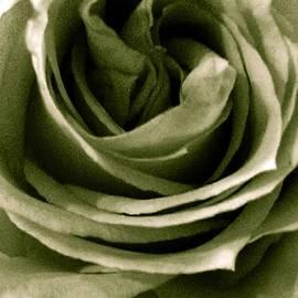 Marian Palucci - Green Pastel Rose