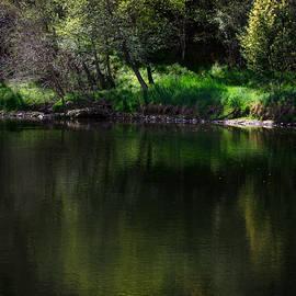 Edgar Laureano - Green Reflections