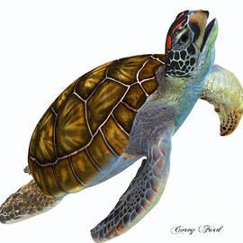 Corey Ford - Green Sea Turtle Profile