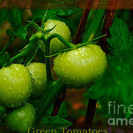 Green Tomatoes by Kaye Menner