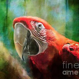 Lois Bryan - Green Winged Macaw