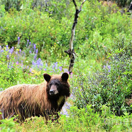 Hughes Country Roads Photography - Grizzly Bear2