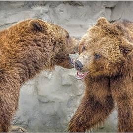 LeeAnn McLaneGoetz McLaneGoetzStudioLLCcom - Grizzly Bears