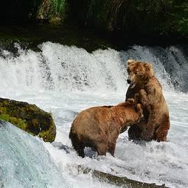 Patricia Twardzik - Grizzly Bears Fighting at the Falls