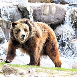 Steve McKinzie - Grizzly Falls