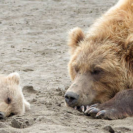 Phil Stone - Grizzly Mom and Cub