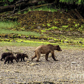 Louise Magno - Grizzly Triplets