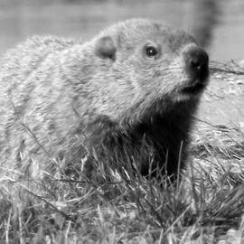 Erika Kennedy - Groundhog