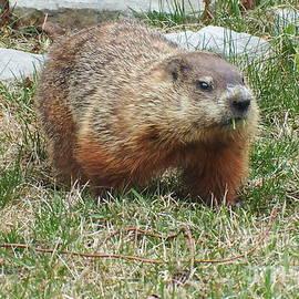 Vicky Tarcau - Groundhog