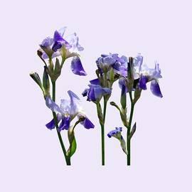 Susan Savad - Group of Purple Irises